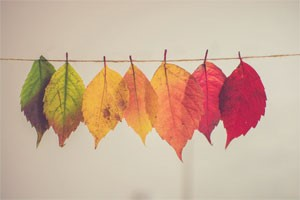 Coloured leaves pegged on a line